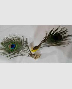 مگنت طاووس